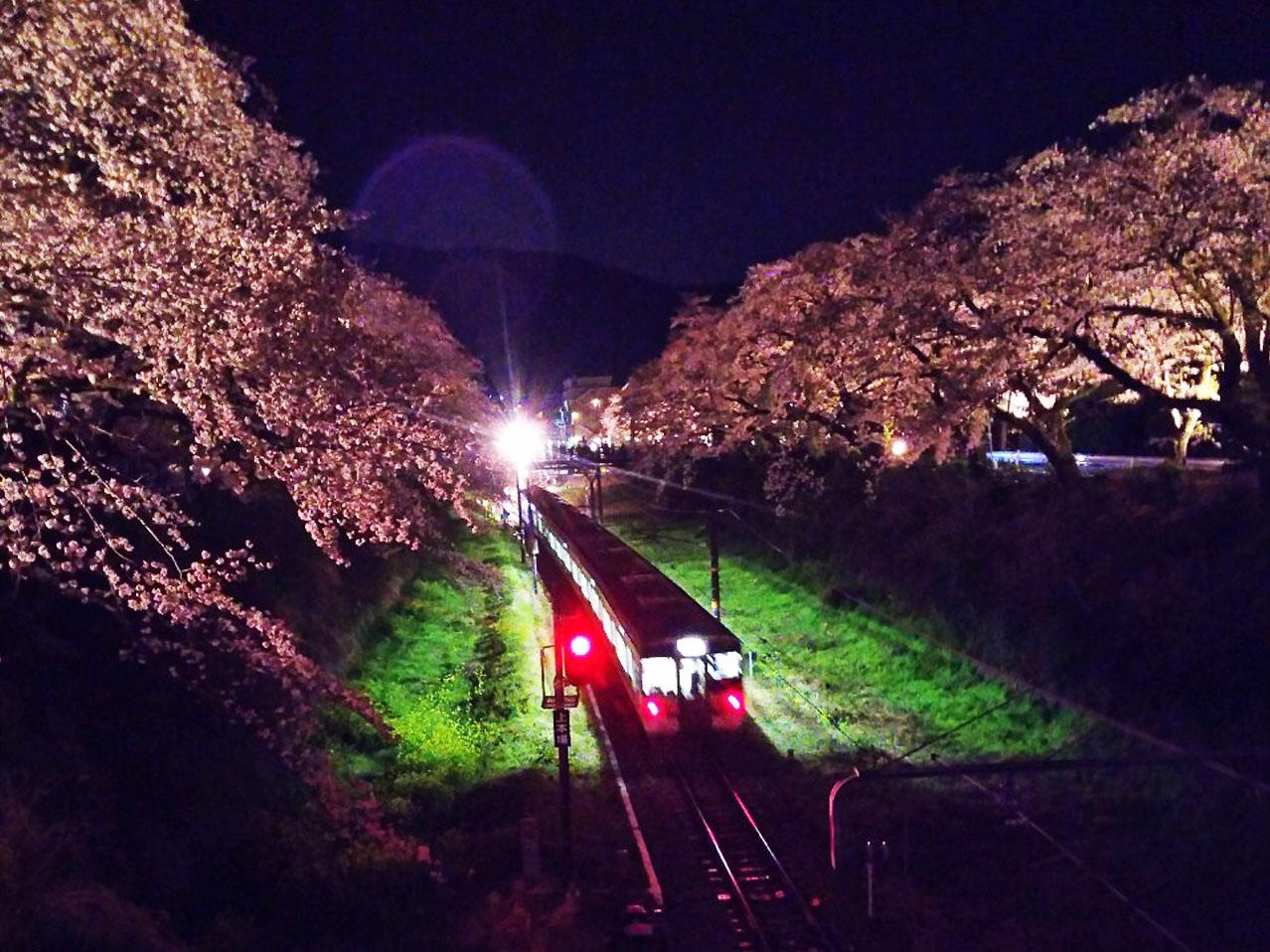 恒例の夜桜見物に